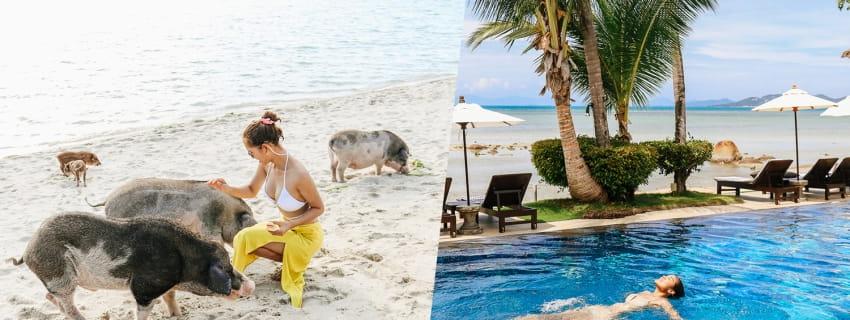 Palm Coco Mantra, เกาะสมุย 3 วัน 2 คืน